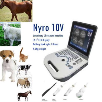 """Nyro 10 - Veterinary Ultrasound"""