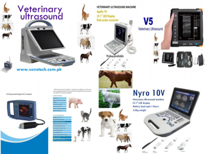 """Veterinary Ultrasounds"""